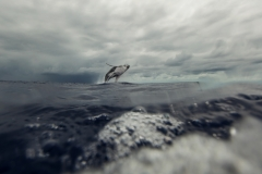 Humpback Whales - breach with wide angle lens
