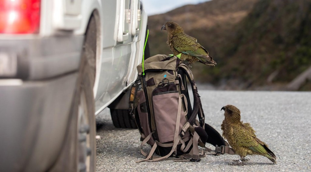birdsonkit