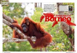 PP-Orangutan-story-1